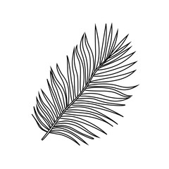 Vector illustration of realistic black outline silhouette tropical exotic palm tree leaves on a white background