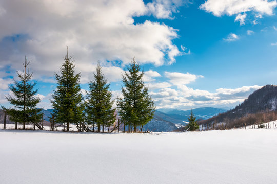 row of spruce trees on the edge of snowy slope. lovely winter scenery in mountain on a sunny day with cloudy sky