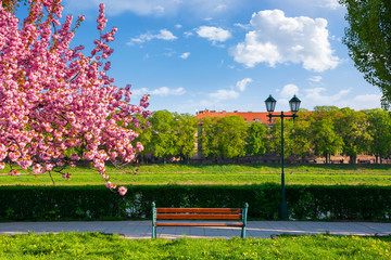 bench on the embankment near the lantern and sakura tree in blossom. wonderful springtime scenery of Uzhgorod town