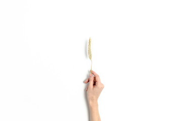 Woman hold in hand a wheat spikelet on a white background