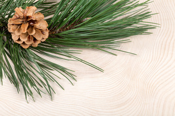 Christmas nature background. Branch of pine with cone on freshly cut of tree.