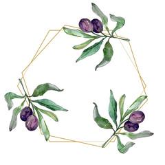 Black olive branch. Plant botanical garden foliage. Watercolor background illustration set. Frame golden crystal.