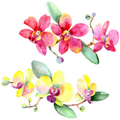 Orchid Floral botanical flower. Wild spring leaf wildflower isolated. Isolated orchid illustration element.