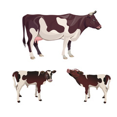 Cow with calves.