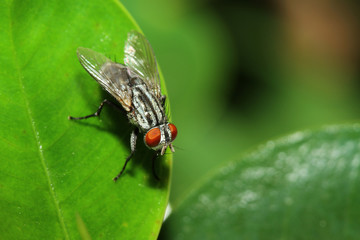 close up fly on leaf
