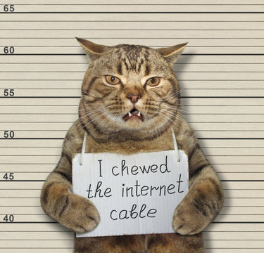 The bad cat chewed the internet cable. He arrested by the police for this crime and sent to prison.