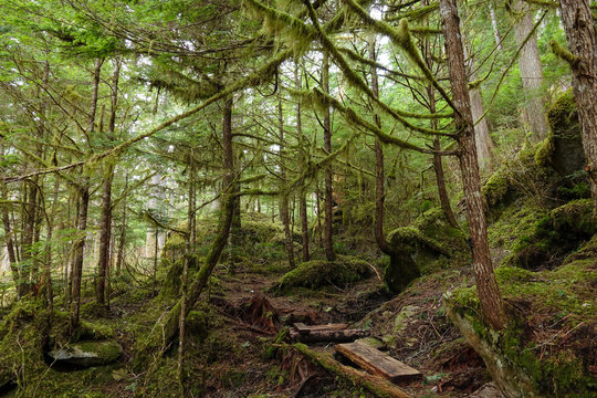 Picturesque view of the fairy tale forest overgrown with vibrant green moss.