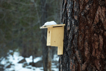 Wooden birdhouse in the forest at Pine Valley, Utah