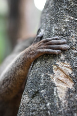 Crop lemur touching tree