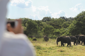 Anonymous person taking pictures of elephants