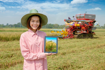 Asian woman farmer using tablet with harvest car in agriculture at golden rice field