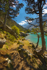 Trees on the bank of a mountain lake Lac de Gaube, Pyrenees Occidentales, France