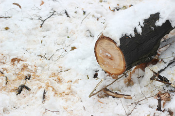Tree cut down snowfall sawdust winter cold park forest deforestation lumber