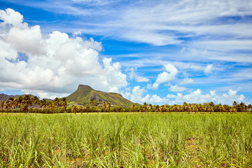 Lion mountain with green sugar cane field foreground on the beautiful tropical paradise island, Mauritius
