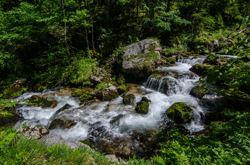 wildbach mit felsen im wald