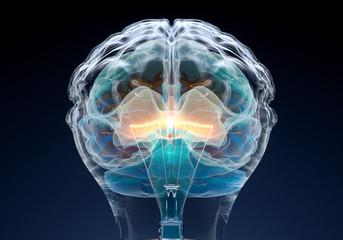 Obraz Glühbirne - Gehirn - fototapety do salonu