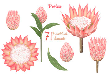 Hand drawn floral protea rose set, Elements for greeting wedding card, invitations, scrapbooking graphics, decorations white isolated