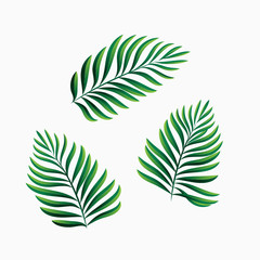 Palm leaves set isolated on white
