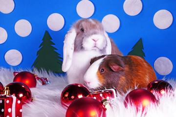 Cute christmas animals. Xmas pet animal guinea pig lop rabbit