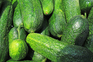 Green raw cucumber whole healthy vegetable diet food low kcal