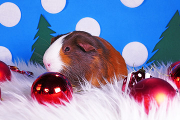 Cute christmas animals. Xmas pet animal guinea pig lop rabbit