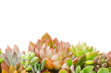 Arrangement of various types red and green succulent flowering houseplants white background