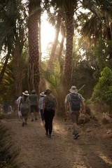 Group walking through forest of palm trees