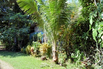 Unusual beautiful tropical trees. Philippines.