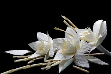 Thai Artificial Funeral Flower(Dok mai chan) on black backgroud with copy space. (Daffodil or narcissus funeral flowers) Wall mural