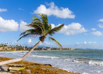 A palm tree next to the sea on a caribbean island