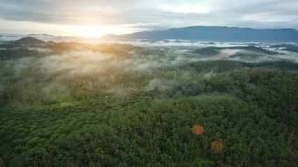 Rubber plantations,Aerial photos