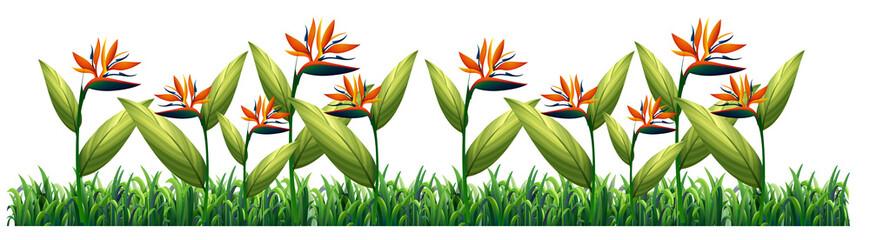 Bird of paradise flower template