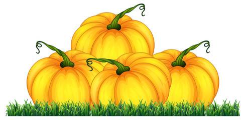Isolated pumpkin on white background