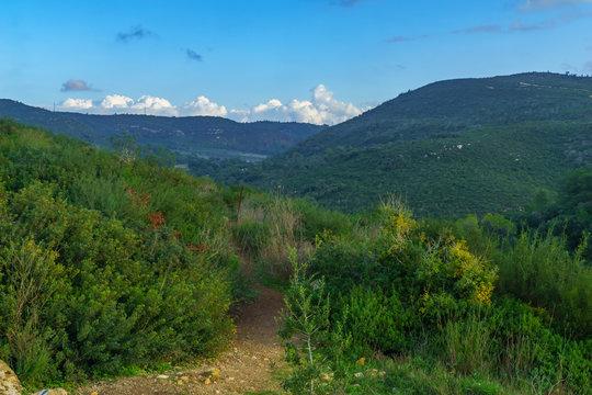 Landscape of Mount Carmel