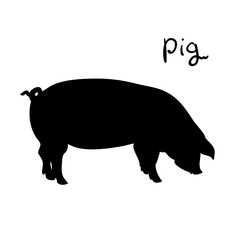 Pig of vector illustration. Silhouette farming animal. Pig on white background