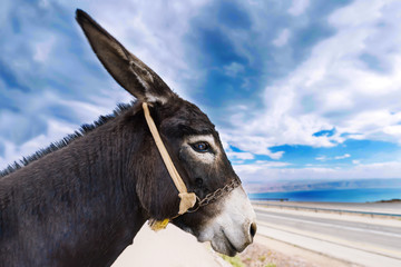 Foto op Plexiglas Ezel Profile face of a donkey against the background of the blue cloudy sky. The best and funny donkey profile photo.