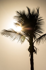 palm leaves illuminated by the sun