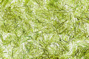 Background, wind texture in green grass. Obtained using computer processing of photographs of dried grass, hay