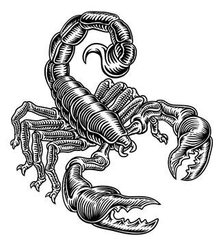 Scorpion Scorpio zodiac animal sign design graphic in a retro vintage woodcut etching style.