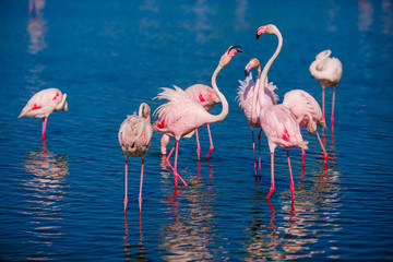 Couple in love birds pink flamingos find out relationship blue water