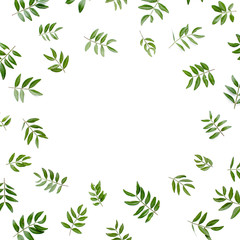 Wall Mural - frame workspace with green leaves isolated on white background. lay flat, top view