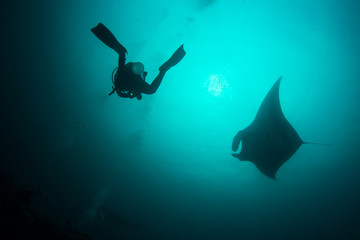 Manta Ray underwater. Scuba dive with Oceanic Mantas