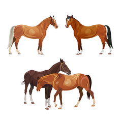 Horse vector set