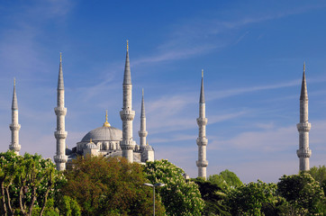 Blue Mosque and Chestnut Trees