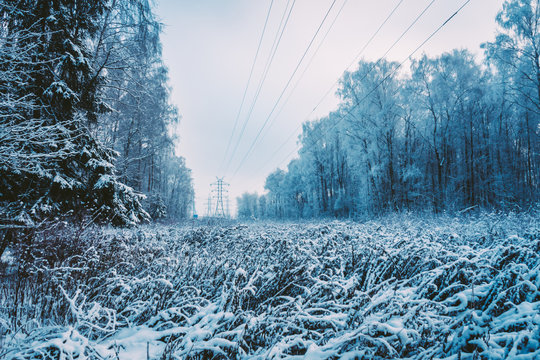 Frozen snowy winter forest where there is a power line