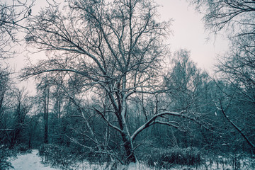 A branchy tree in a gloomy winter Park