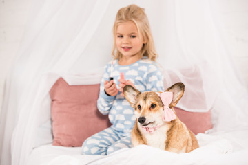 adorable kid with lip gloss looking at corgi dog with pink bow