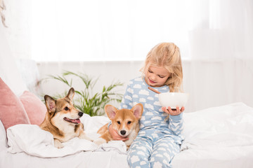 adorable child sitting on bed with pembroke welsh corgi dogs and holding bowl of cereal at home