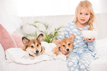 cute child sitting on bed with pembroke welsh corgi dogs and holding bowl of cereal