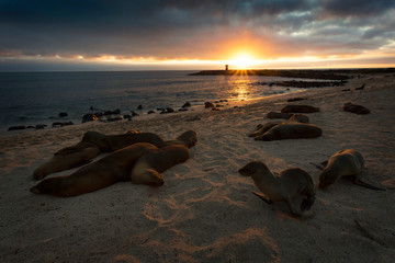 Sunset at a beach full of sea lions at San Cristobal, Galapagos Islands
